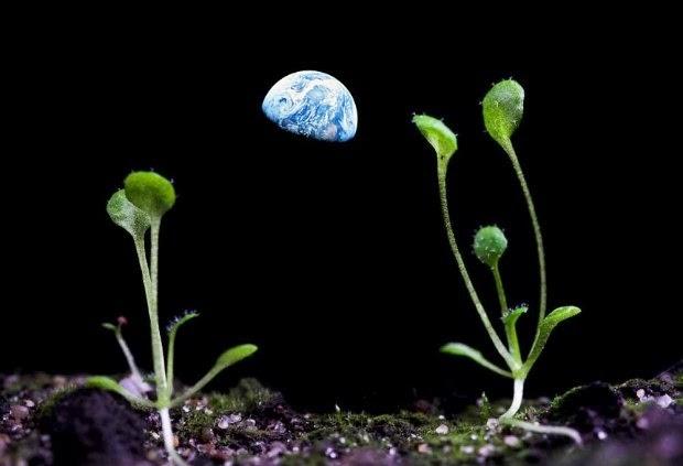 China logra germinar la primera planta en la Luna. Las semillas llevadas al espacio por Chang'e-4, la misión china a la cara oculta de la Luna, ya brotaron, según informó la Administración Nacional del Espacio de China (ANEC).
