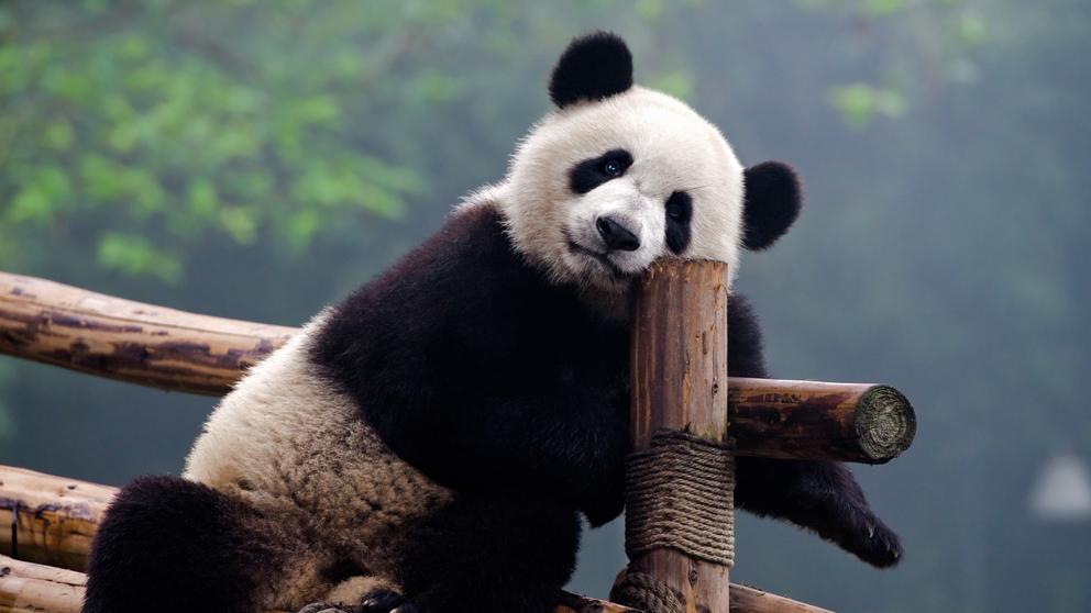 En 40 años el humano exterminó al 60% de los animales en el planeta