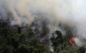 Arrasador incendio en el Amazonas. La selva delAmazonasenBrasilse consume con losincendios.En lo que va de este año se ha registrado unaumento del 83% de los incendiosen la región en comparación con el año pasado.