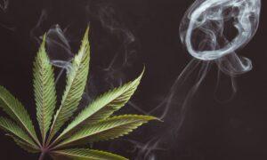 Vender y Comprar Cannabis legal en México.