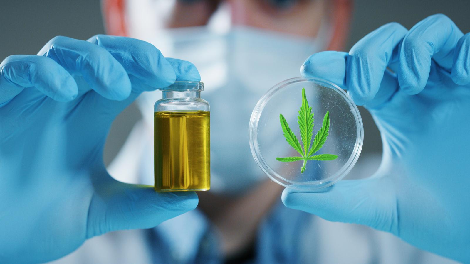 ¿Cuánto tiempo dura la Marihuana ó Cannabis en la sangre? | Descarga la guía PDF aquí